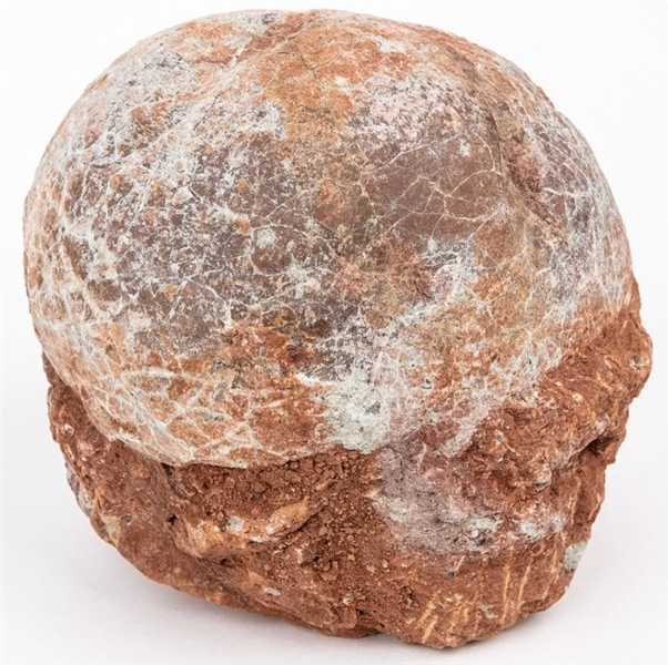 80 Million Year Old Duckbilled Dinosaur Egg